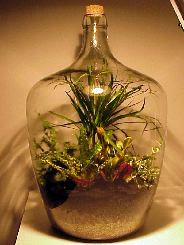 Bottle Garden Always Attracts Interest True Has A Stopper Of Some Kind On The Top It Is Sealed Environment Moisture In Air Recirculates